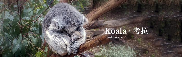来自澳大利亚的金毛和考拉宝宝可爱合影:跨越物种的感情
