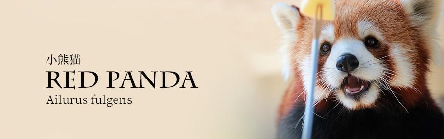 一个热爱小动物的摄影博客 萌萌的小熊猫才是真爱